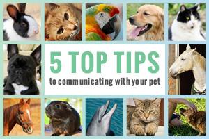 animal communication enews