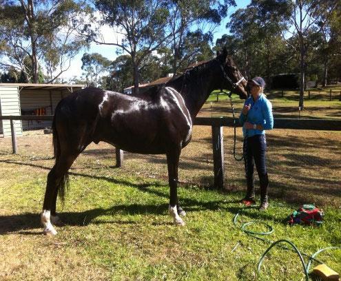 benji horse animal