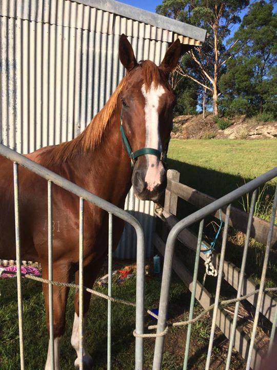 dj horse animal
